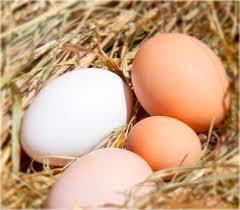 free_range_eggs1