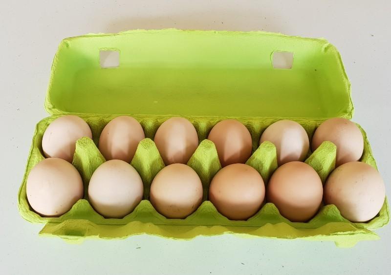 Eggs20181109